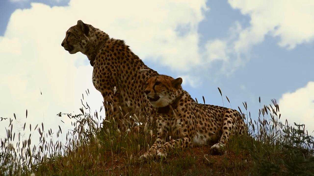 The End Of Big Cats